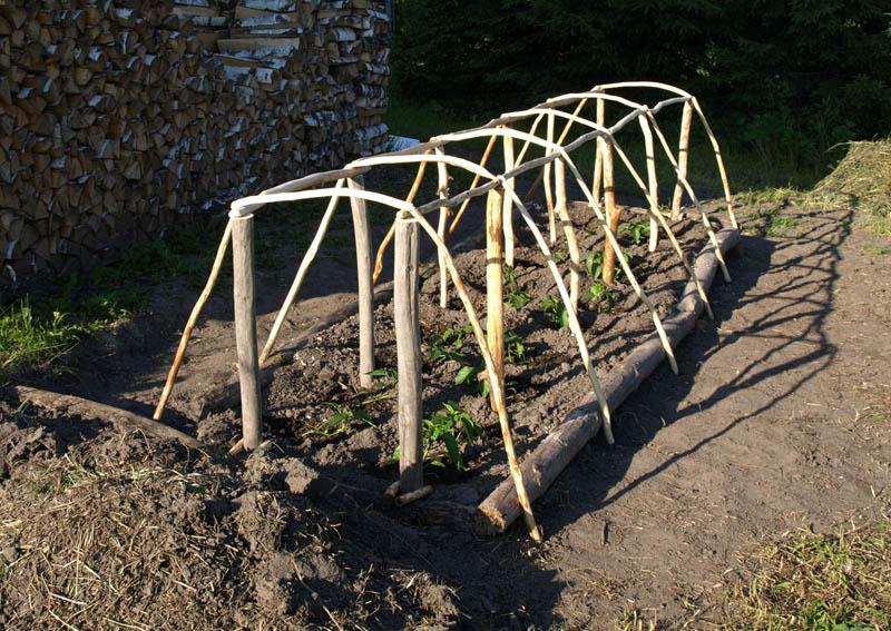 Как сделать укрытие для помидор в открытом грунте